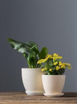 Domowe rośliny w doniczkach na drewnianym stole na ciemnej powierzchni