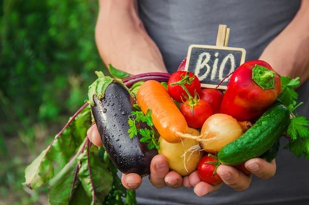 Domowe warzywa w rękach mężczyzn. żniwa. selektywna ostrość.