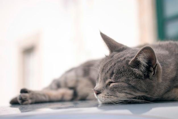 Domowy kot na górze samochodu
