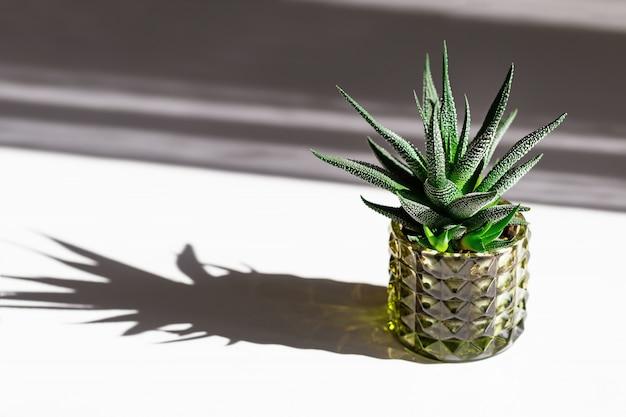 Domowy kwiat kaktusa w doniczce z ciemnymi cieniami od światła słonecznego