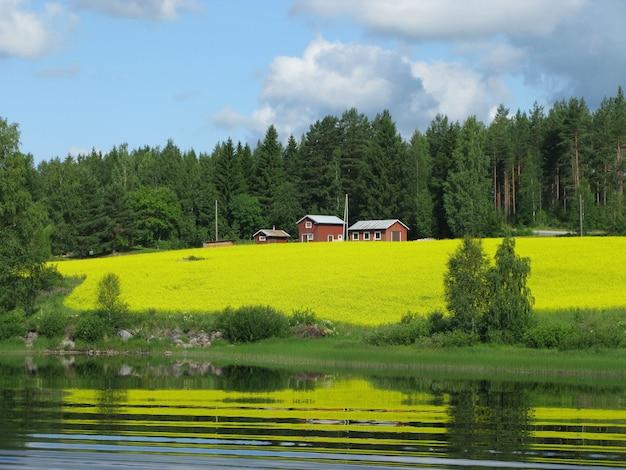 Domy i drzewa na pięknym wzgórzu porośniętym trawą nad jeziorem uchwyconym w finlandii