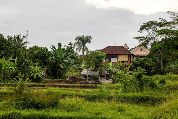 Domy w dżungli. krajobraz bali.