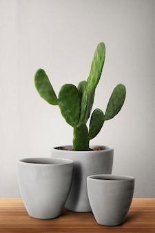 Donice betonowe z kaktusem cereus