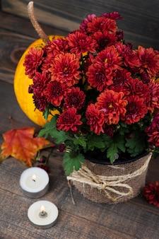 Doniczka z czerwonych kwiatów chryzantemy