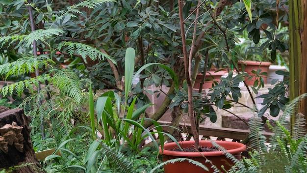 Doniczka z kwiatami w ozdobnej szklarni. tropikalna oranżeria