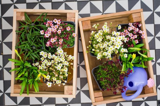 Doniczki do małego ogrodu, patio lub tarasu. sadzonki wiosennych pięknych kwiatów w drewnianym pudełku.