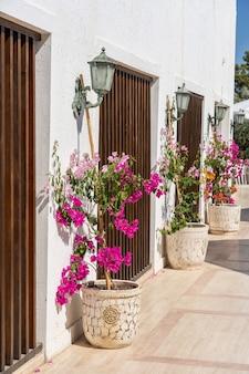 Doniczki z jasnymi ozdobnymi kwiatami w pobliżu białej ściany na ulicy miasta bodrum, turcja