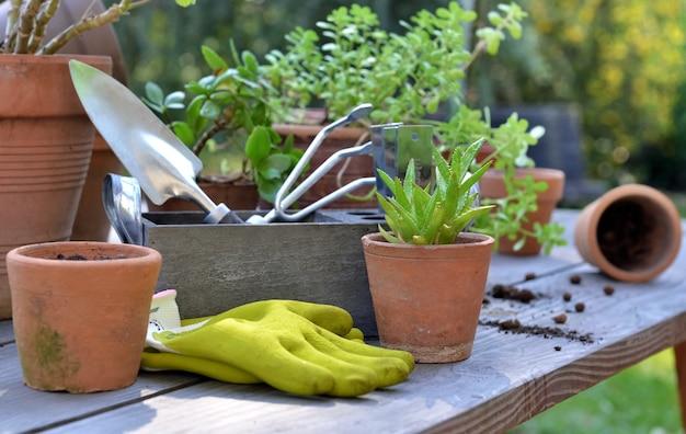 Doniczki z terakoty i sadzić na drewnianym stole ze sprzętem ogrodniczym w ogrodzie