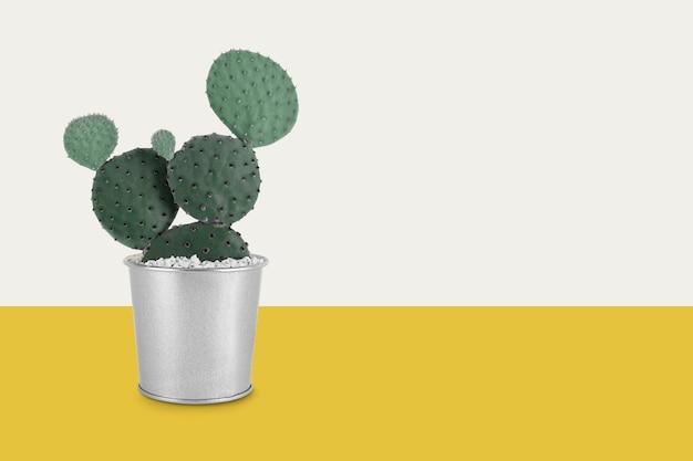 Doniczkowe kaktusy retro żółte tło