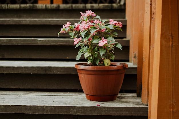 Doniczkowy domowy kwiat na schodkach w domu z miejscem dla teksta