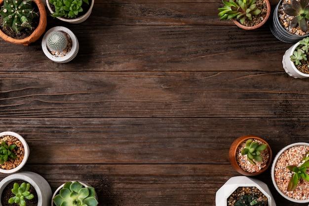 Doniczkowy kaktus i soczyste tło z pustą przestrzenią