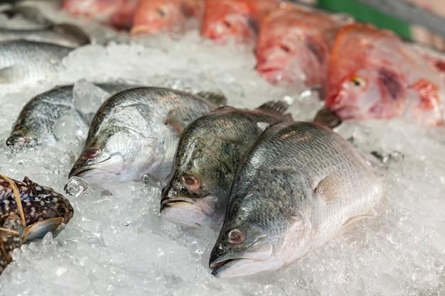 Dorado złotogłowy leszcz na lodzie na stoisku z owocami morza na targu ulicznym, zbliżenie rzędów ryb