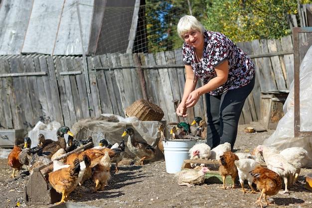 Dorosła kobieta karmiąca kurczaki i kaczki na farmie na wsi