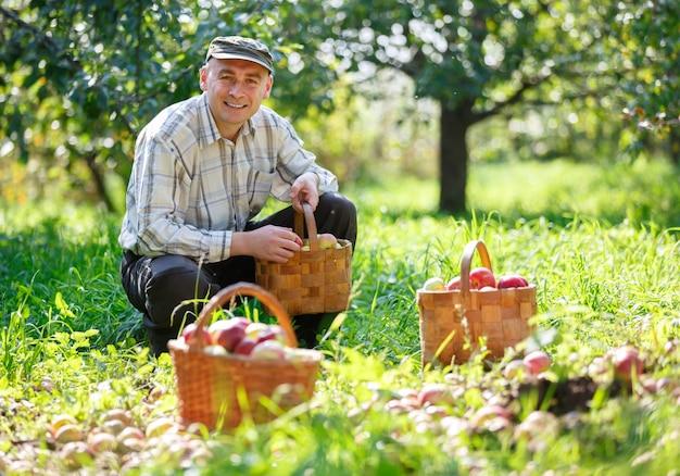 Dorosły człowiek w słonecznym ogrodzie z koszami jabłek