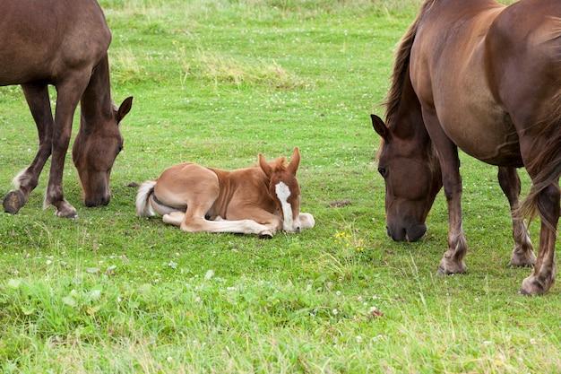 Dorosły koń z małym źrebakiem na łące z zieloną trawą, zbliżenie