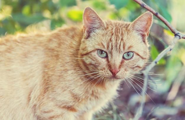 Dorosły kot domowy siedzi w trawie