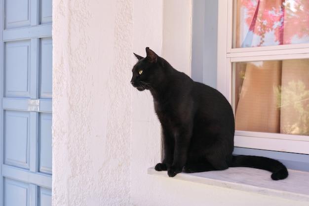 Dorosły mężczyzna piękny czarny kot siedzi na parapecie, patrząc z boku, na zewnątrz, biała ściana w przestrzeni domowej, miejsce na kopię