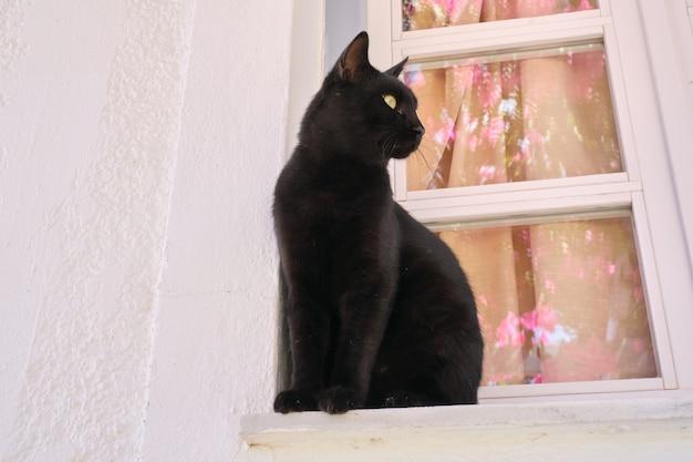 Dorosły mężczyzna piękny czarny kot siedzi na parapecie, patrząc z boku