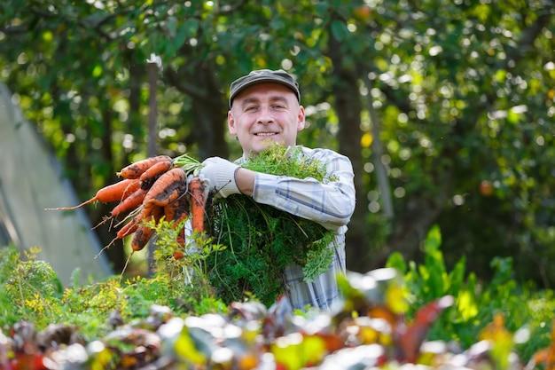 Dorosły mężczyzna w ogrodzie, zbierać marchewki