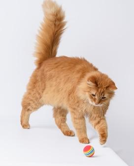 Dorosły puszysty czerwony kot bawi się czerwoną piłką na białym tle, słodkie zwierzę