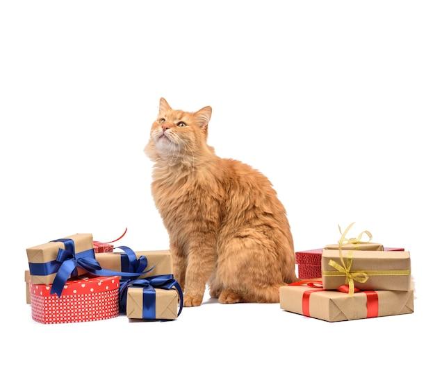 Dorosły rudy kot siedzący pośrodku pudełek zawinięty w brązowy papier i przewiązany jedwabną tasiemką