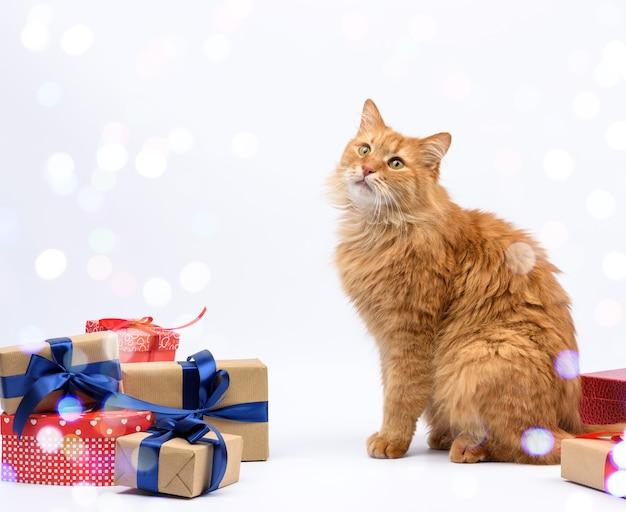 Dorosły rudy kot siedzi pośrodku pudełek przewiązany jedwabną wstążką, prezentami i zwierzęciem na białym tle