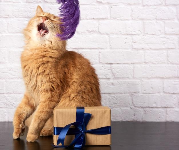 Dorosły rudy kot z otwartymi ustami i pudełkiem z prezentem