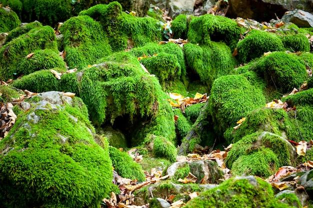 Dorośnięty zielony mech pokrywa szorstkie kamienie