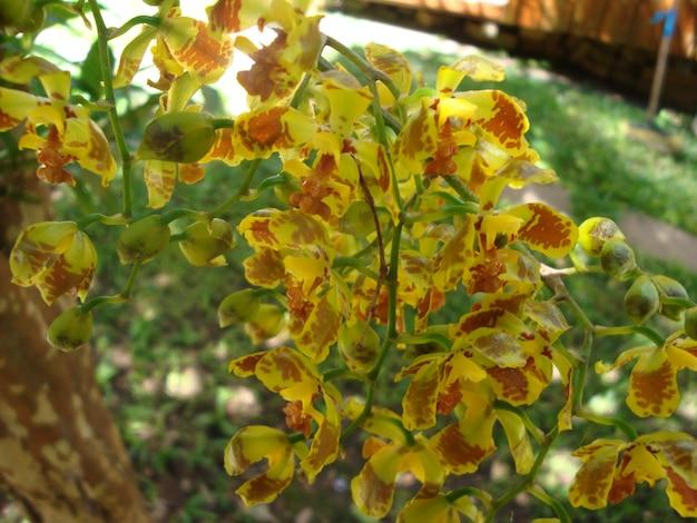 Dość egzotyczne żółty kwiat orchidei