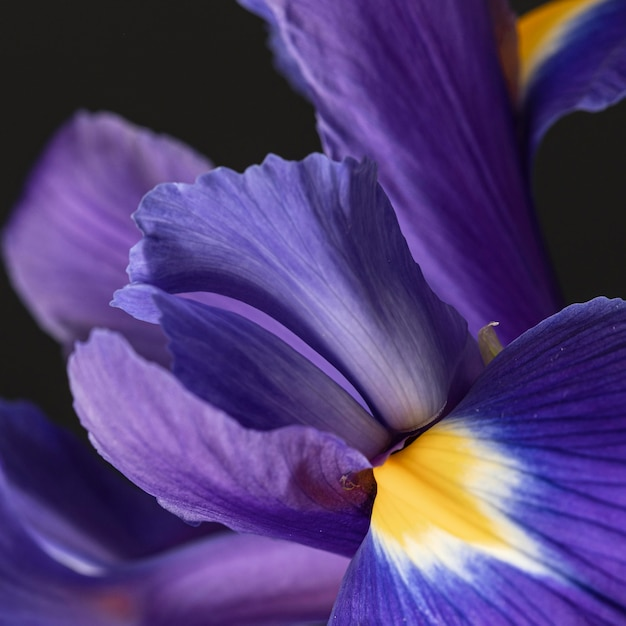 Dość makro fioletowy kwiat