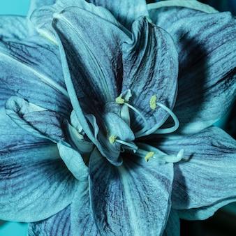 Dość makro niebieski kwiat