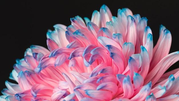Dość makro różowy i niebieski kwiat