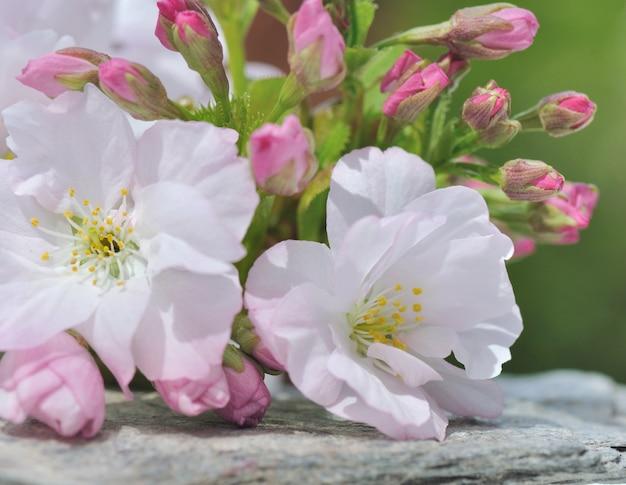 Dość wiśniowe kwiaty