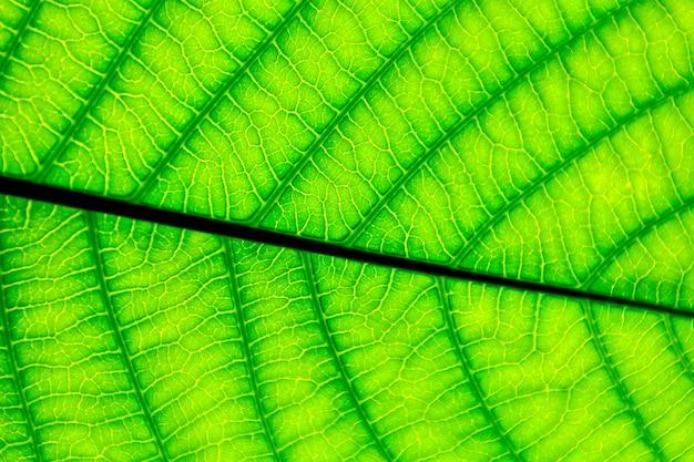 Doskonałe wzory zielonych liści - zbliżenie