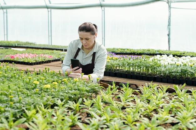 Doświadczony rolnik fotografujący smartfonem sadzonki kwiatów