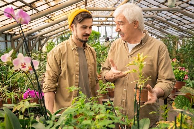 Doświadczony starszy mężczyzna trzymający roślinę doniczkową i wskazujący na nią, ucząc syna uprawy roślin w szklarni