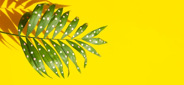 Dotty paproci liście z kopii przestrzeni tłem