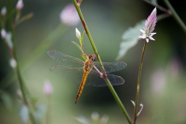 Dragonfly na kwiat roślinie