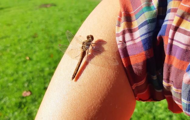 Dragonfly ręka lato człowiek zielona trawa światło cień owad spokojny 9 marca