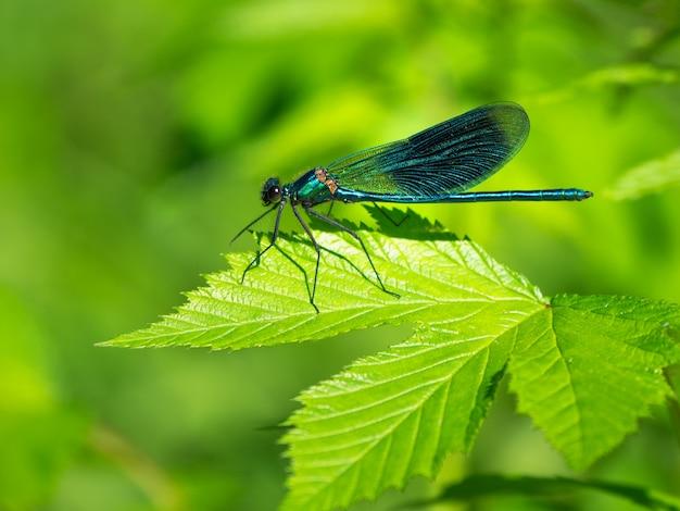 Dragonfly w świetle słonecznym na liściu