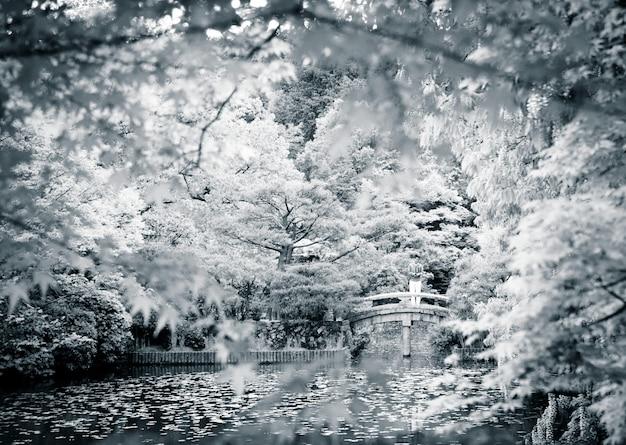 Dramatyczna scena w parku kyoto. japonia