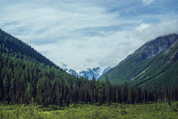 Dramatyczny krajobraz z śnieżnymi górami za zielonymi jodłowymi wierzchołkami pod chmurnym niebem.
