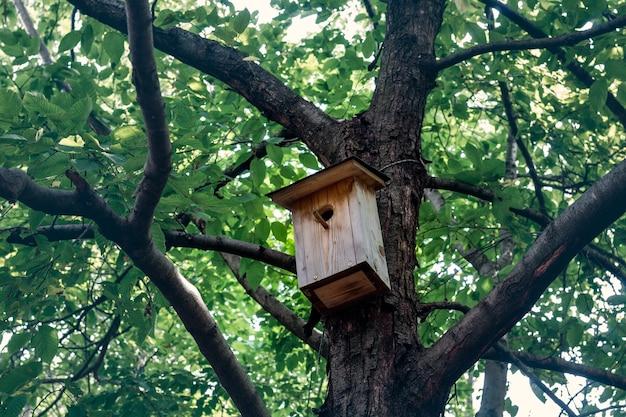 Drewniana budka dla ptaków na drzewie w parku bioróżnorodności valpolicella