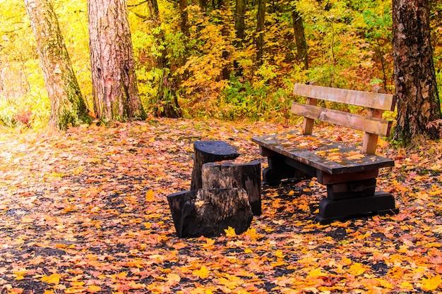 Drewniana ławka w jesiennym lesie z ziemią pokrytą żółtymi liśćmi klonu