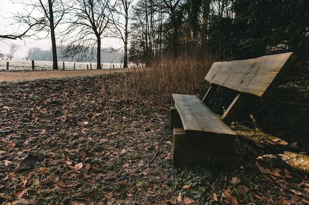 Drewniana ławka w parku otoczonym zielenią