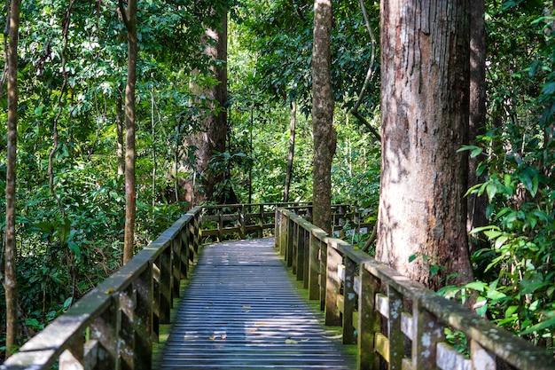 Drewniana platforma na spacer po lesie deszczowym na wyspie borneo w malezji