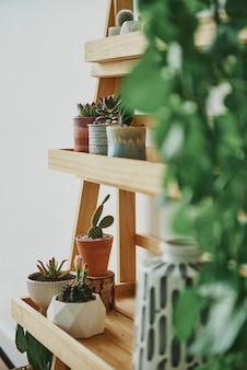 Drewniana półka na rośliny z mieszanymi roślinami