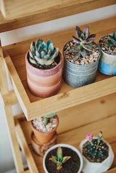 Drewniana półka na rośliny z uroczymi małymi kaktusami