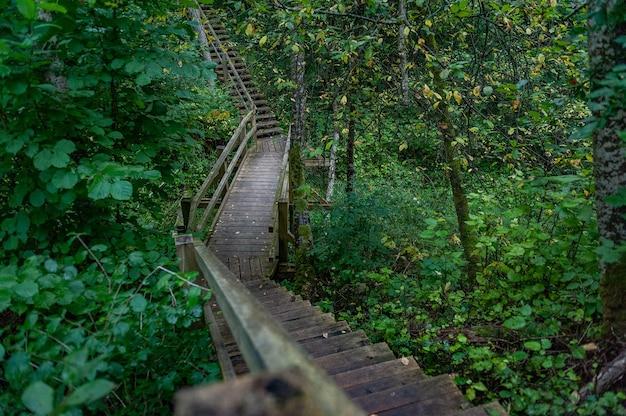 Drewniana promenada w lesie.