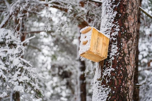 Drewniana ptaszarnia na sośnie w winter park, ukraina. zimowy las z drzewami i birdhouse pokryte śniegiem. spokojna zimowa przyroda